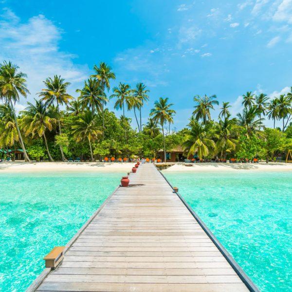 Tropical sea dream